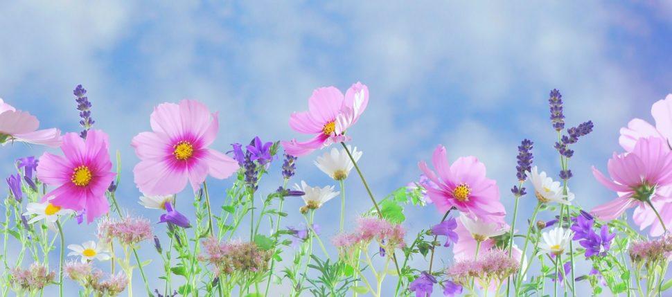Vděčnost. Děkuji za krásu květin a za jejich vůni, kterou si mohu vychutnávat.